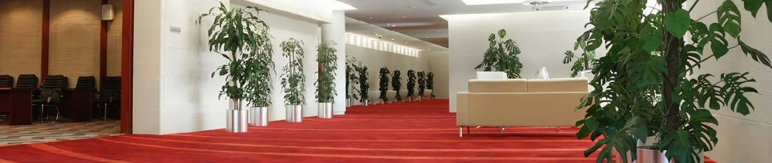 commerical-building-with-cleaned-carpet